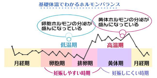 高温期・低温期のグラフ